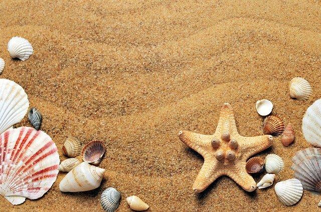 Mušle v písku